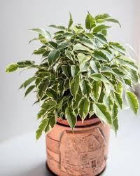 Plantes/ Quelques soins à leur donner…