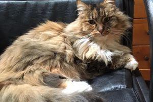 AMBRE s'appelle CANNELLE - chaton femelle  - adoptée à 2 mois
