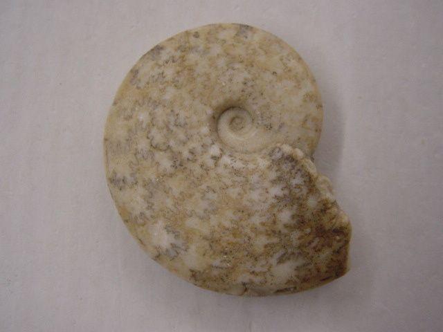 """<p></p> <p>Aaaah les ammonites ! Les fossiles par excellence ! Probablement, grâce à leur forme en spirale parfaite, les fossiles les plus appréciés !</p> <p>Voici quelques spécimens sélectionnés pour le plaisir des yeux.</p> <p>Tous proviennent de ma collection privée.</p> <p>Bon amusement !</p> <p>Phil """"Fossil""""</p>"""