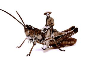 Grasshopper-boy I et Grasshopper-boy II / GhB2014©