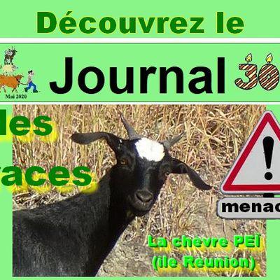 """Journal des races menacées (8) : spécial """"orphelines"""""""