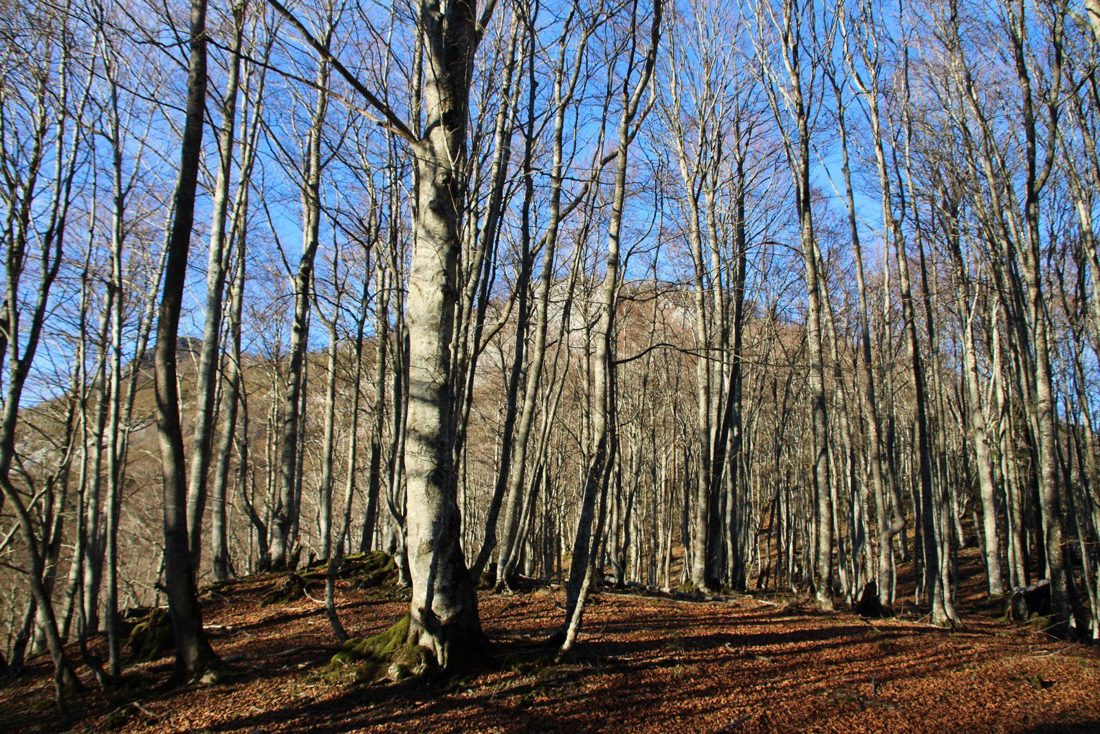 Couvert forestier.