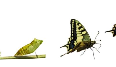 Foncteur & transformation naturelle - métonymie