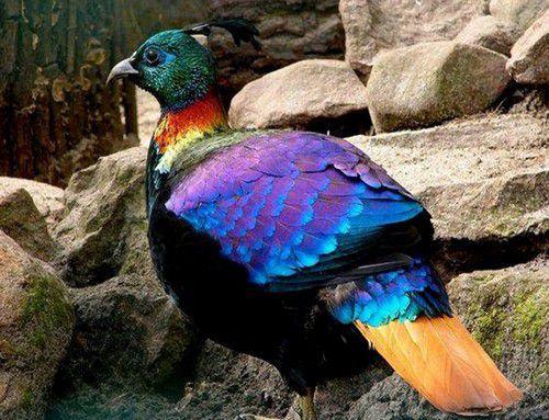 Qu'ils sont beaux nos oiseaux !