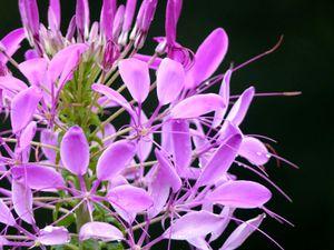 Fleurs du jour (21-17) - Au Phu Foi Lom (3)