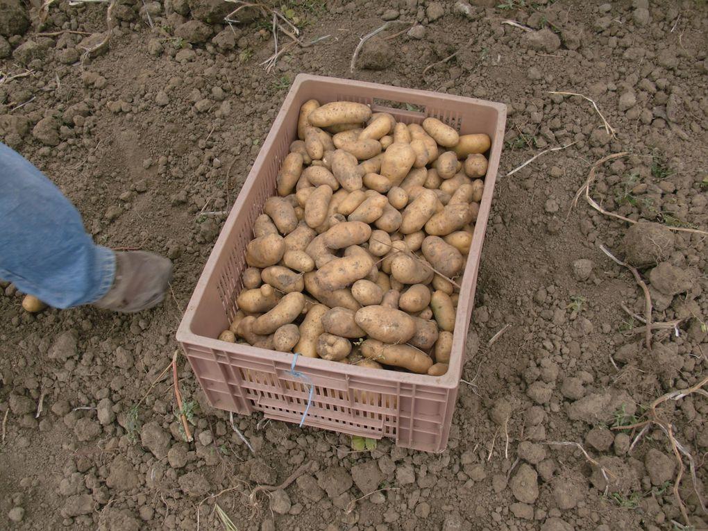 Album - Corvée de patates et auberge espagnole le 23.09.12
