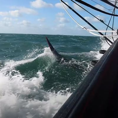 Halted like the rest of the IMOCA fleet by the COVID-19 pandemic, Skipper Alex Thomson and his team waited patiently to return to training