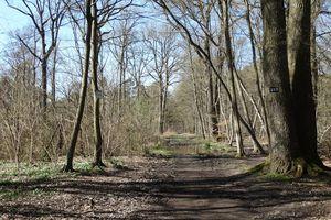 Forêt de Fontainebleau au début du printemps