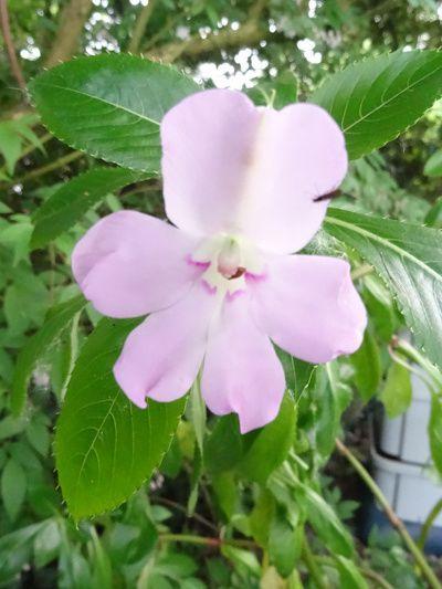 Voici les premières fleurs de mai