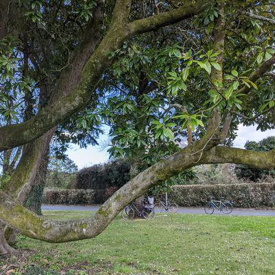 27/03/2021: Préserver les arbres en ville: conseils d'un expert
