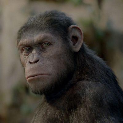 """[Exclu] Les effets spéciaux de """"La planète des singes - origines"""""""