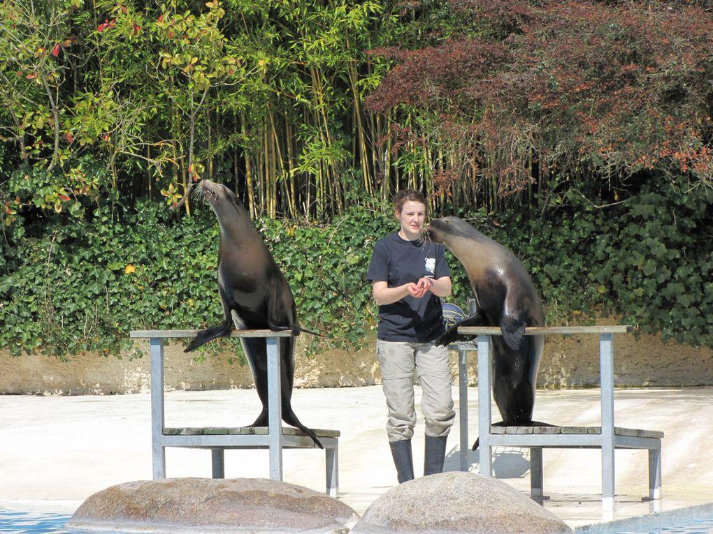 Spectacle d'otaries proposé le 18 avril 2010 aux visiteurs du ZooParc de Beauval à Saint-Aignan, Loir et Cher