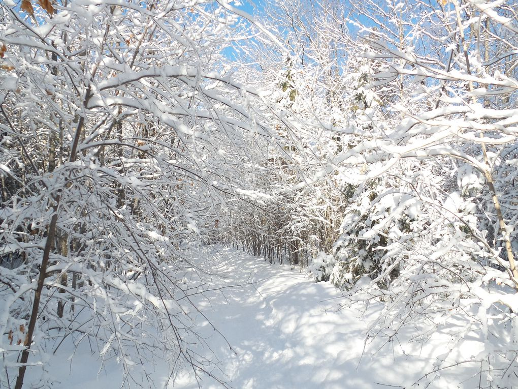 Ballades dans la forêt Boucher