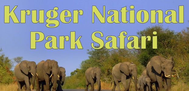 Encounter The Wild And Historical Places With Your South Africa Tour Package