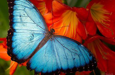 Le papillon qui rêve encore