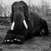 Crimes contre l'animalité
