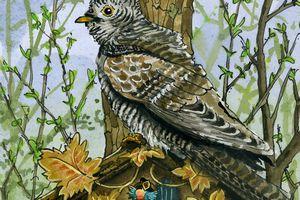 Le Coucou gris, l'oiseau invisible