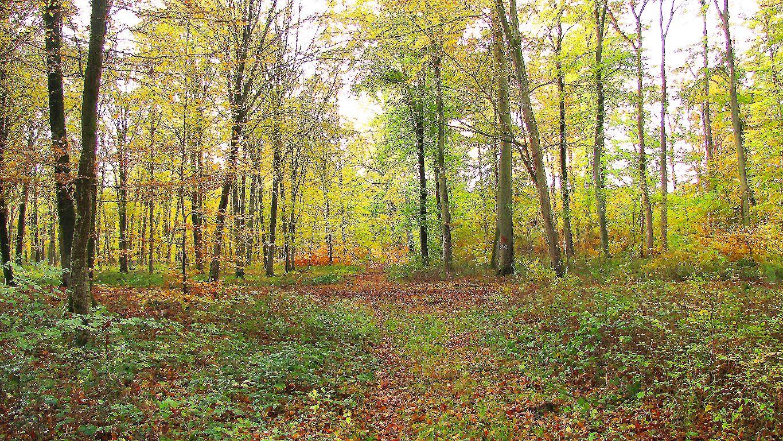 carrefour_Route d'Humières_Route du Vivier-Frères-Robert