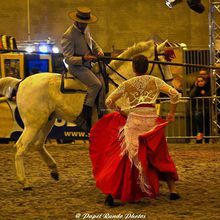 SALON DU CHEVAL MONS 2016