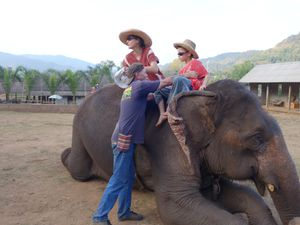 Au pays des animaux et des bouddhas