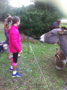 Petite Ballade pour aller nourrir les ânes ...!!!
