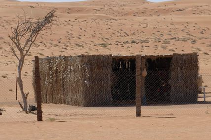 Ziegenmilch bei Beduinen - letztes Highlight im Oman