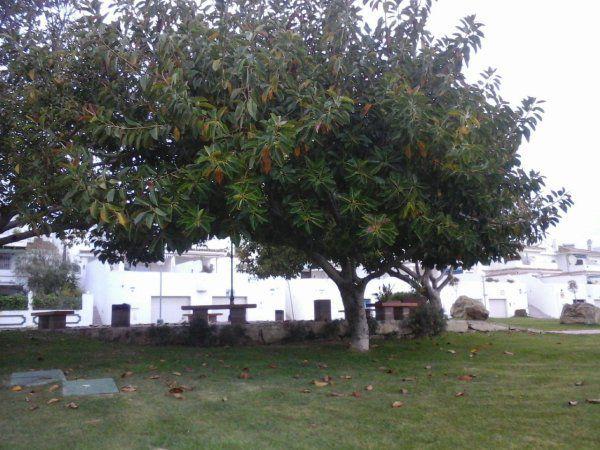 image du jour + photo le camp de ce soir ;L'arbre sur la photo est un ficus