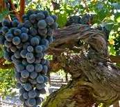 #Red Blend Wine Producers New York Vineyards