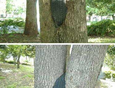 Pneu arbre en fusion...