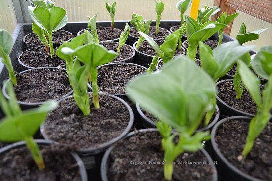Formation : Réussir ses semis, c'est facile et avantageux  (2 jours)