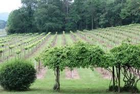 De la vigne en Alabama