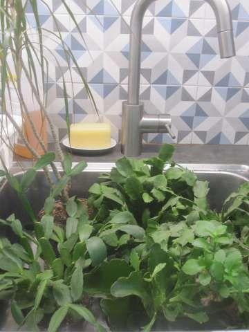 La jungle dans un évier...
