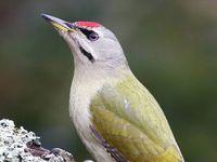 Oiseaux du Perche : Spatule blanche, Busard Saint Martin, Pic cendré et ... trouvez !