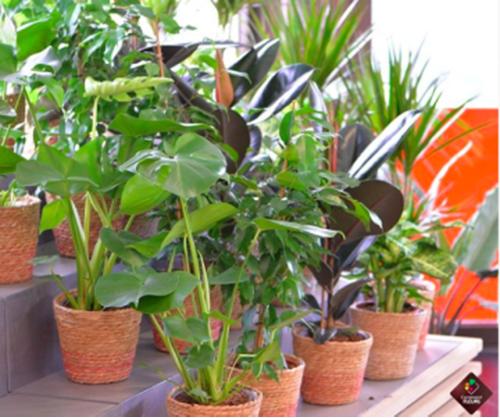 plante verte carrement fleurs