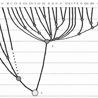 L'arbre de l'humanité à l'aune du Chromosome Y