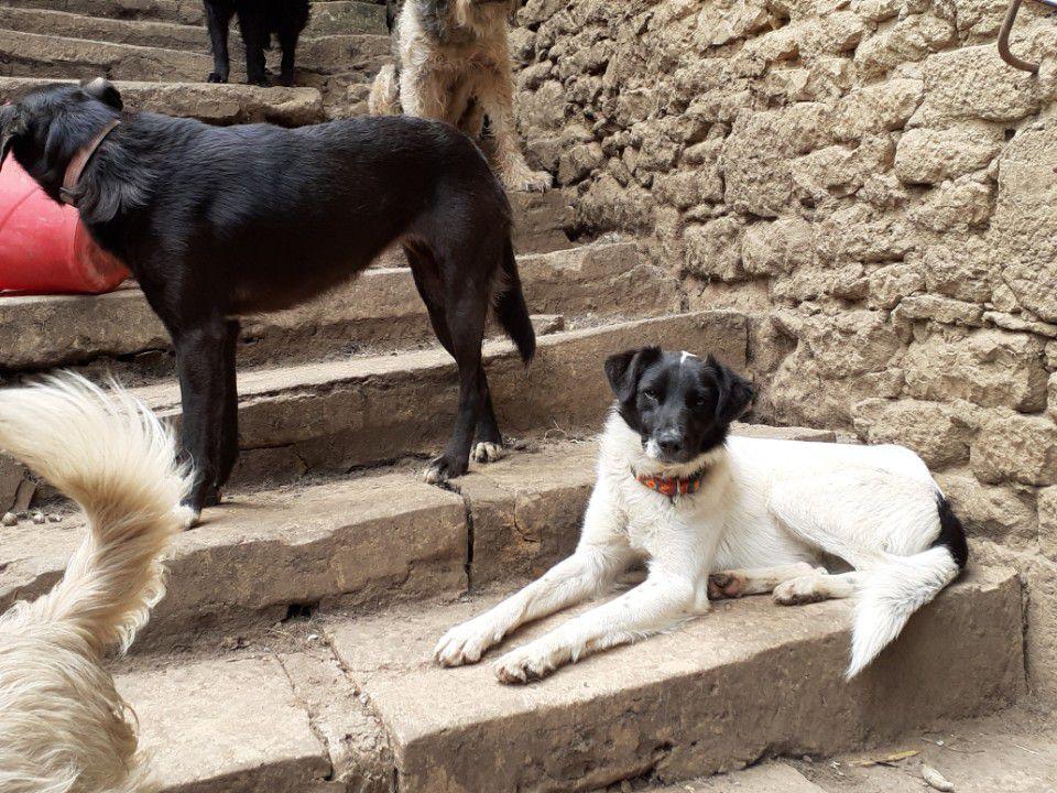 A l'adoption : Pérou, 1 an, très câlin