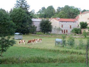 Rencontres d'été / Balade en Haute-Loire