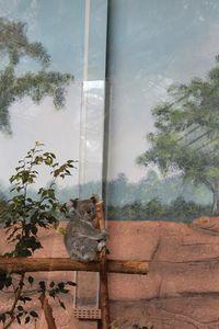 Zoo de Beauval : la serre australienne
