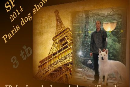 résultat exposition 2014 paris Dog show berger blanc suisse