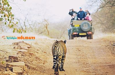 Jungle Safari: As Exciting As it Sounds