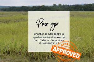 Logonna-Daoulas --- Chantier de lutte contre la spartine américaine avec le Parc National d'Armorique