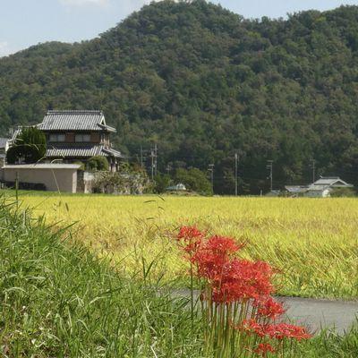 Préf. de Hyôgo: Balade bucolique de septembre du côté de Hazukawa