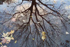 Un arbre se mire