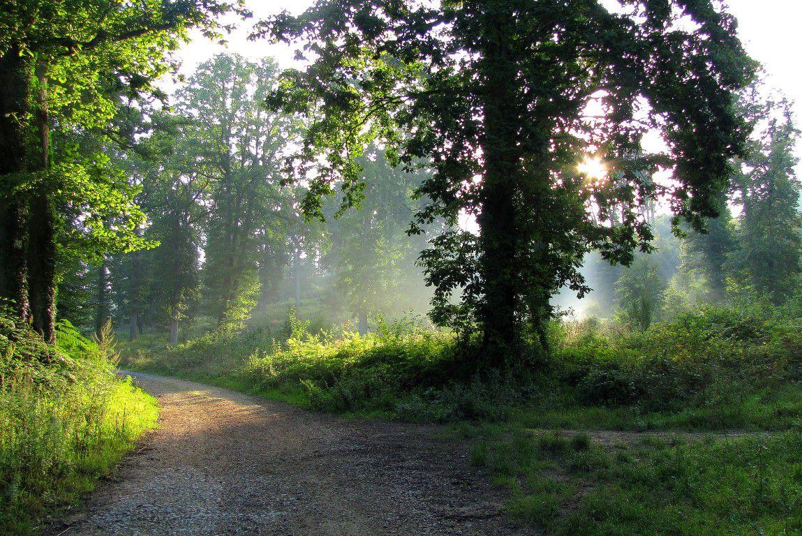 la Route Forestière des Princesses