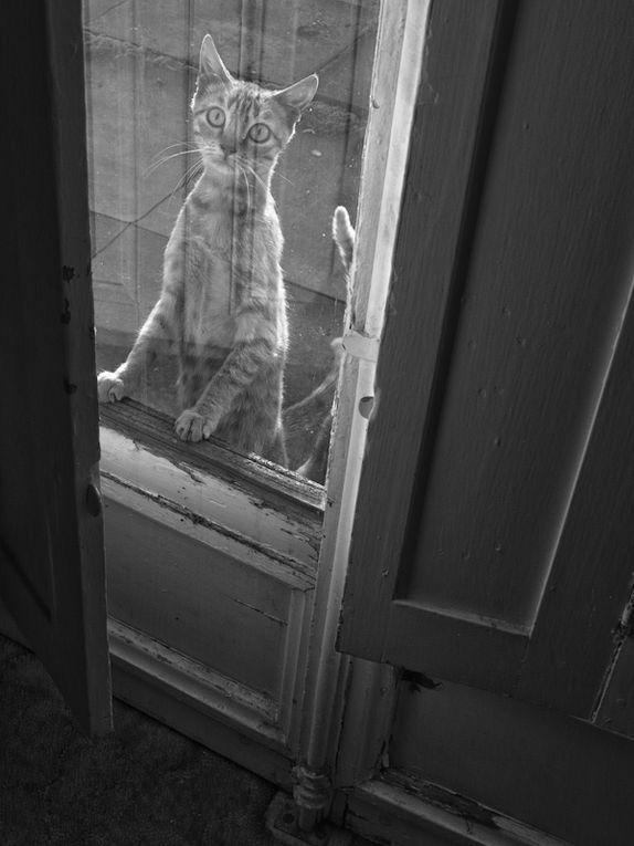Album - De ma fenêtre