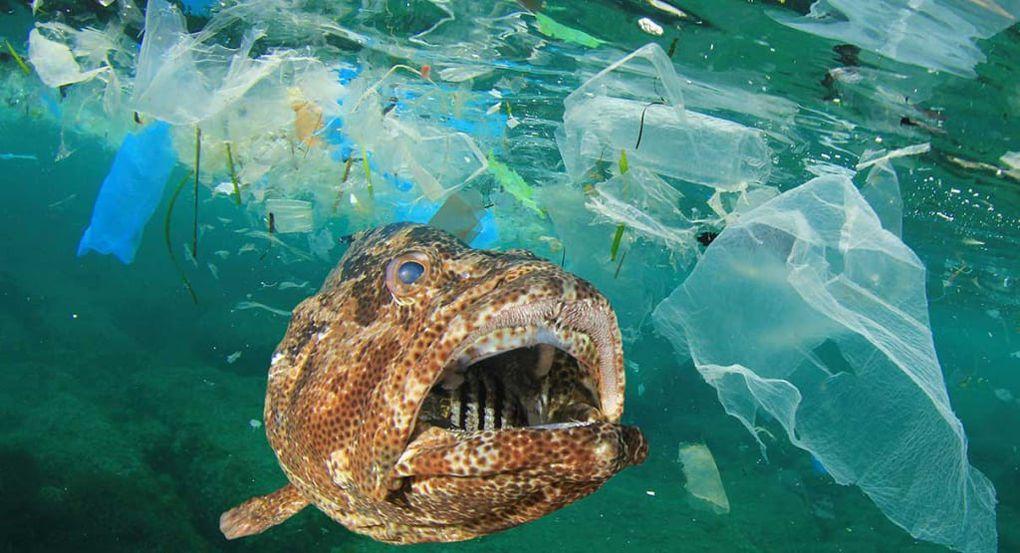 Les fonds marins jonchés de microplastiques, d'après une nouvelle étude