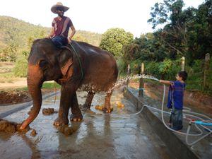 J'ai des éléphants dans la rue. Surtout, j'ai pu monter dessus. Je lui ai donné la douche sauf qu'il y avait papa dessus. Il était tout mouillé !