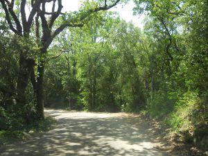 Souvenir d'une randonnée estivale sur les petites routes de la Drôme provençale.