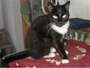 Chatte ADOPTEE : Chiquita