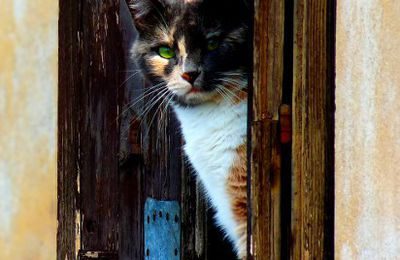 le bidule incrusteur de chats